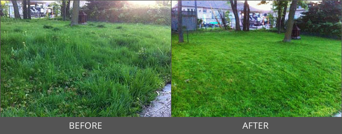 Project Gallery Emission Free Lawn Care In Mississauga