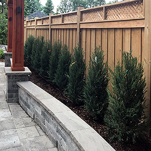 Kick Gas Lawn Care provides landscaping services like hedge installations throughout Mississauga.