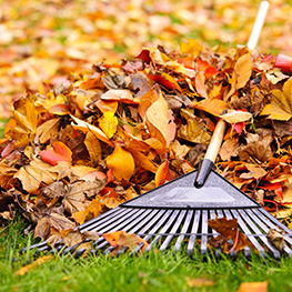 Kick Gas Lawn Care provides environmentally friendly spring/fall clean-up and property maintenance services throughout Mississauga and the Greater Toronto Area.